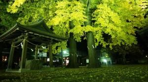 諏訪の中心で「愛」を叫ぶ!<br>日本最初のイチョウは諏訪にある!?