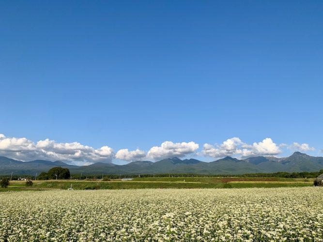 八ヶ岳 蕎麦