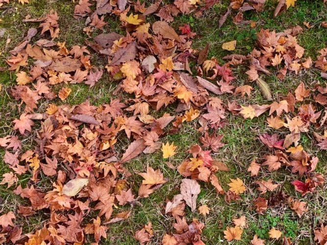 八ヶ岳自然文化園紅葉